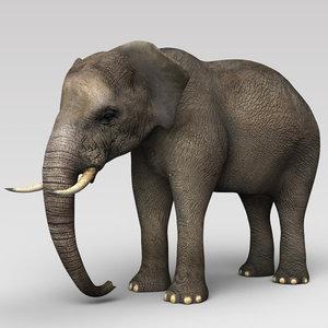 3D elephant indian model