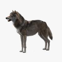 3D wolf model