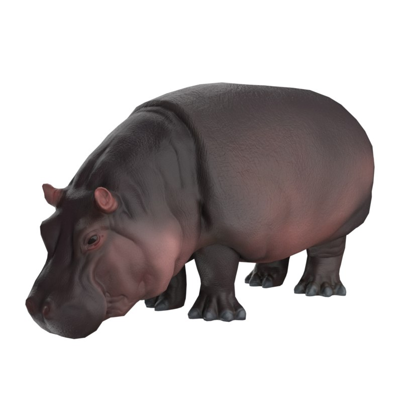 3D model low-poly hippopotamus