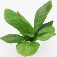 lettuce food 3D