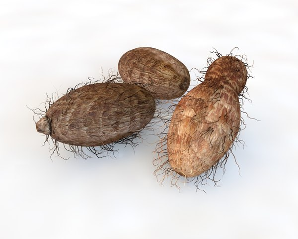 onion potato 3D model