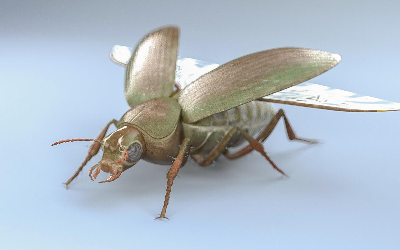 3D model beetle bee