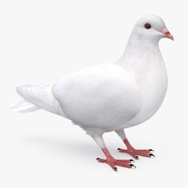 3D dove rigging animation