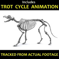 Canine Skeleton - Includes an Animation