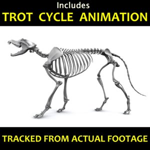 canine skeleton bones animation model