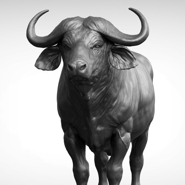 3D african buffalo black cape model