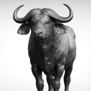 3D african buffalo black cape model