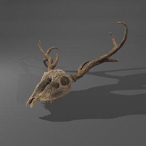 3D stag animal skull model