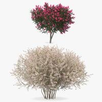 Flowering Bushes 3D Models Collection