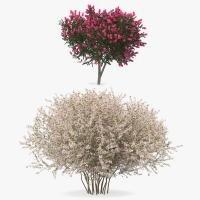 3D flowering bushes