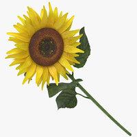 3D helianthus annuus yellow - model