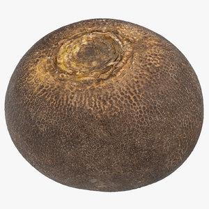 turnip black 02 3D model