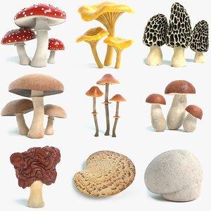 3D mushroom amanita chanterelle morel