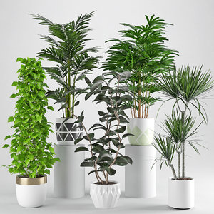 3D houseplant 34 model