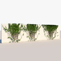 wall ivys 3D model