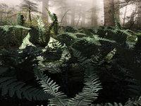 set plants north forest model