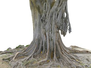 giant tree jungle 3D model