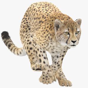 3D cheetah fur