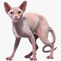 Sphynx Cat (2) (Rigged)