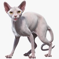3D sphynx cat rigged