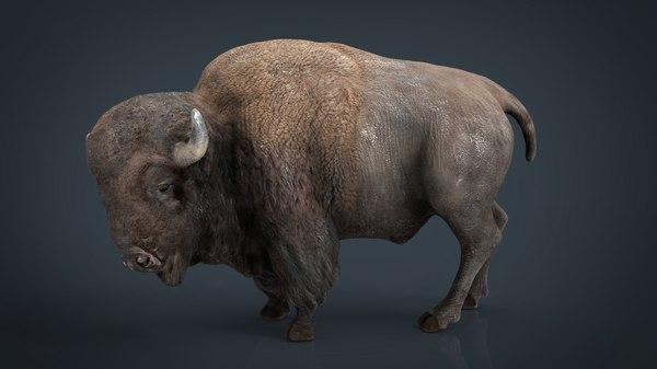 american bison 3D model