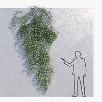 3D ivy - wall model