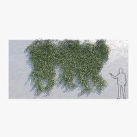 Ivy - Variation B