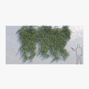 ivy - wall b 3D model