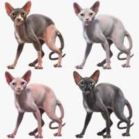 Sphynx Cats Collection (Rigged)