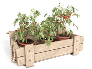 3D tomato plants wooden model