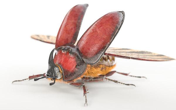 3D beetle bee