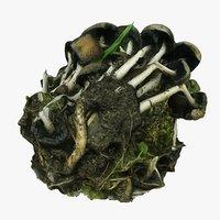 garden mushrooms model