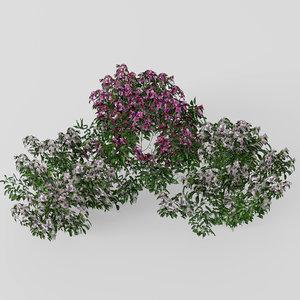 3D model azalea