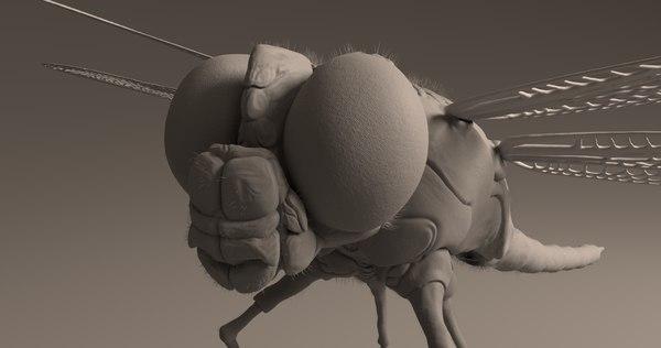 3D dragon fly animate
