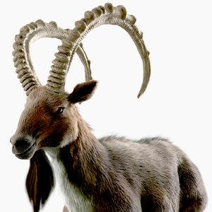 3D wild goat model
