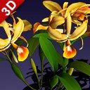 flower guarianthe 3D