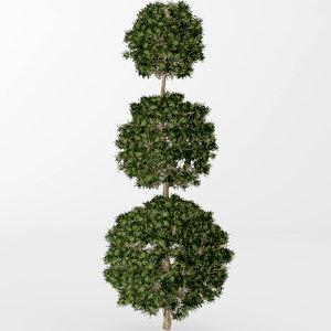 boxwood topiary 3D model