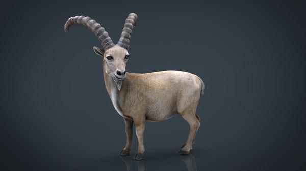 wild goat model