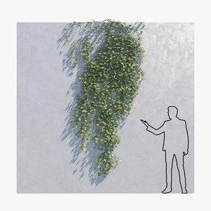 ivy - wall model