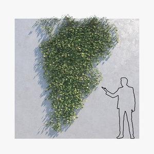 3D ivy - wall