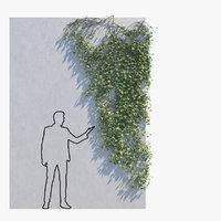ivy - wall 3D model