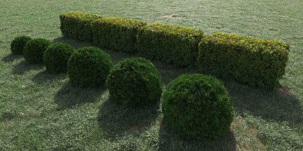 3D hedge bush model