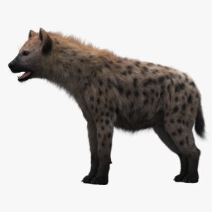 hyena fur modeled 3D model