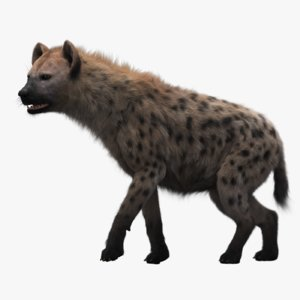 3D model hyena rigged