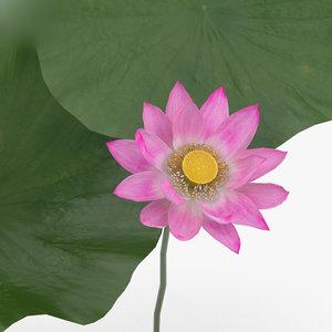 3D flowers plant nature