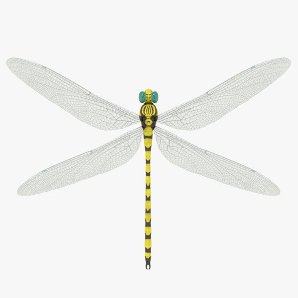 yellow dragonfly 3D