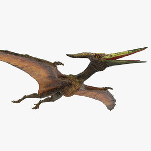 pteranodon flying carnivorous reptile 3D