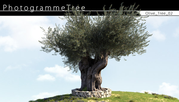 olive tree 3D