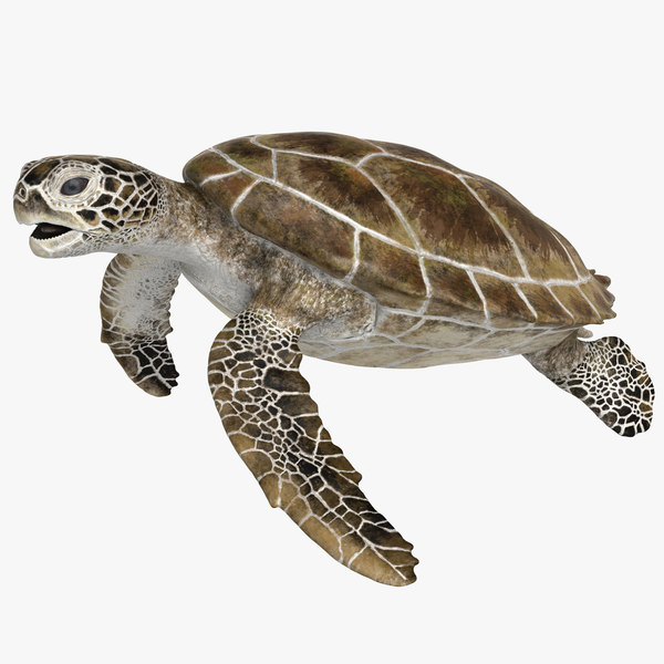 rigged green sea turtle 3D model