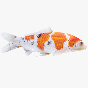 3D model koi fish animation